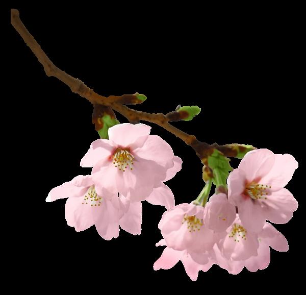 Vintage apple blossom page divider clipart svg freeuse download Spring Branch PNG Picture | dekopaj | Pinterest | Clip art ... svg freeuse download