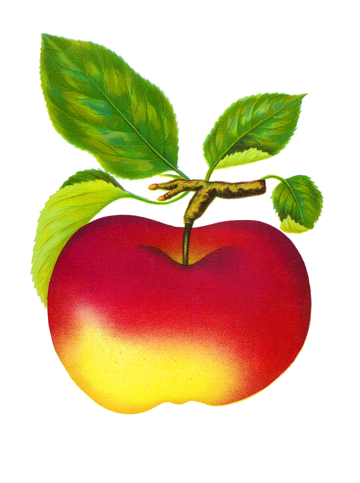 Vintage apple free clipart vector royalty free download 28+ Collection of Vintage Apple Clipart | High quality, free ... vector royalty free download