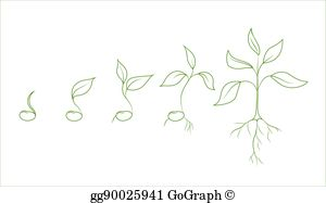Vintage bean sprout clipart banner freeuse library Bean Plant Clip Art - Royalty Free - GoGraph banner freeuse library