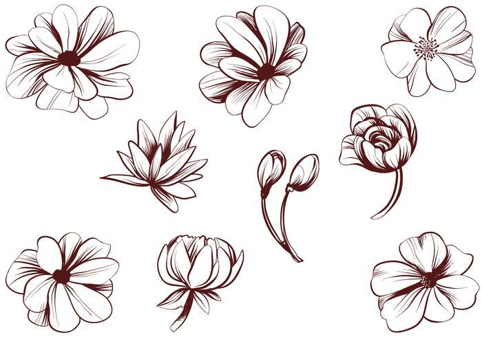 Vintage bloom clipart picture transparent Free Vintage Detailed Flower Vectors - Download Free Vectors ... picture transparent