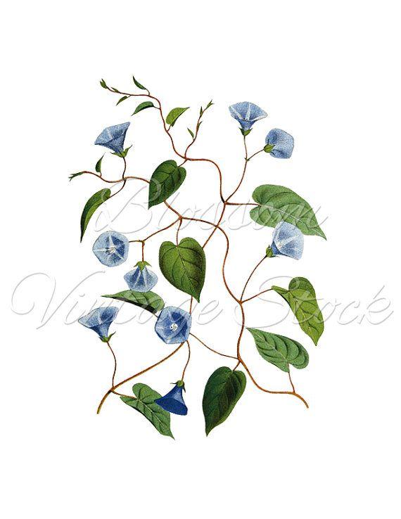 Vintage blue flower clipart banner transparent stock Blue Flower Botanical Vintage Prints Blue Flower Clipart ... banner transparent stock