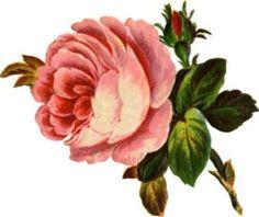 Vintage clip art flowers jpg royalty free download Free Victorian Flowers and Vintage Fruit Clip Art and Borders ... jpg royalty free download
