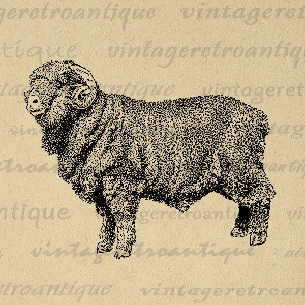 Vintage clipart ram
