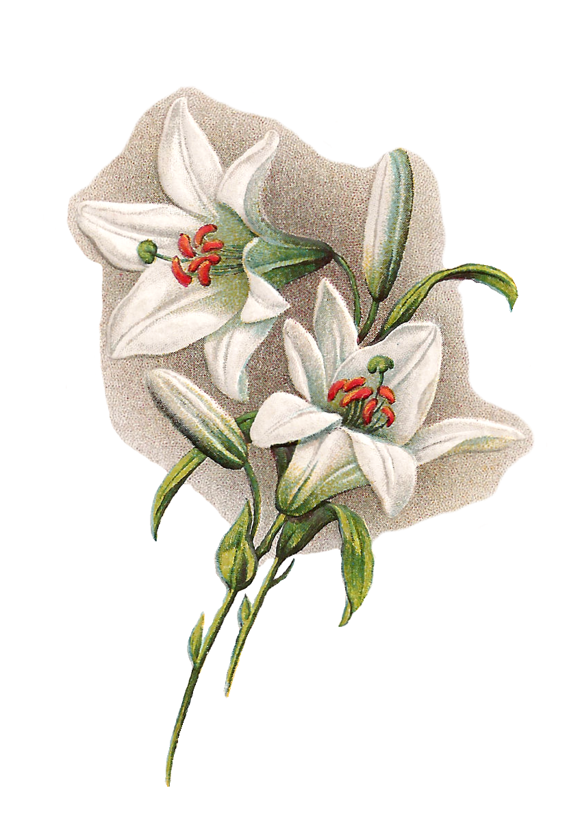 Vintage easter lily clipart clipart royalty free download Easter Lilies Clipart Group with 54+ items clipart royalty free download
