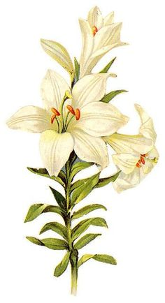Vintage easter lily clipart picture transparent 18 Best Easter Lily Flower Tattoo Art images in 2017 ... picture transparent