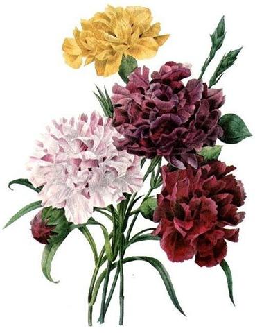 Vintage floral images free jpg black and white download 17 Best images about Vintage - Flower Images on Pinterest ... jpg black and white download