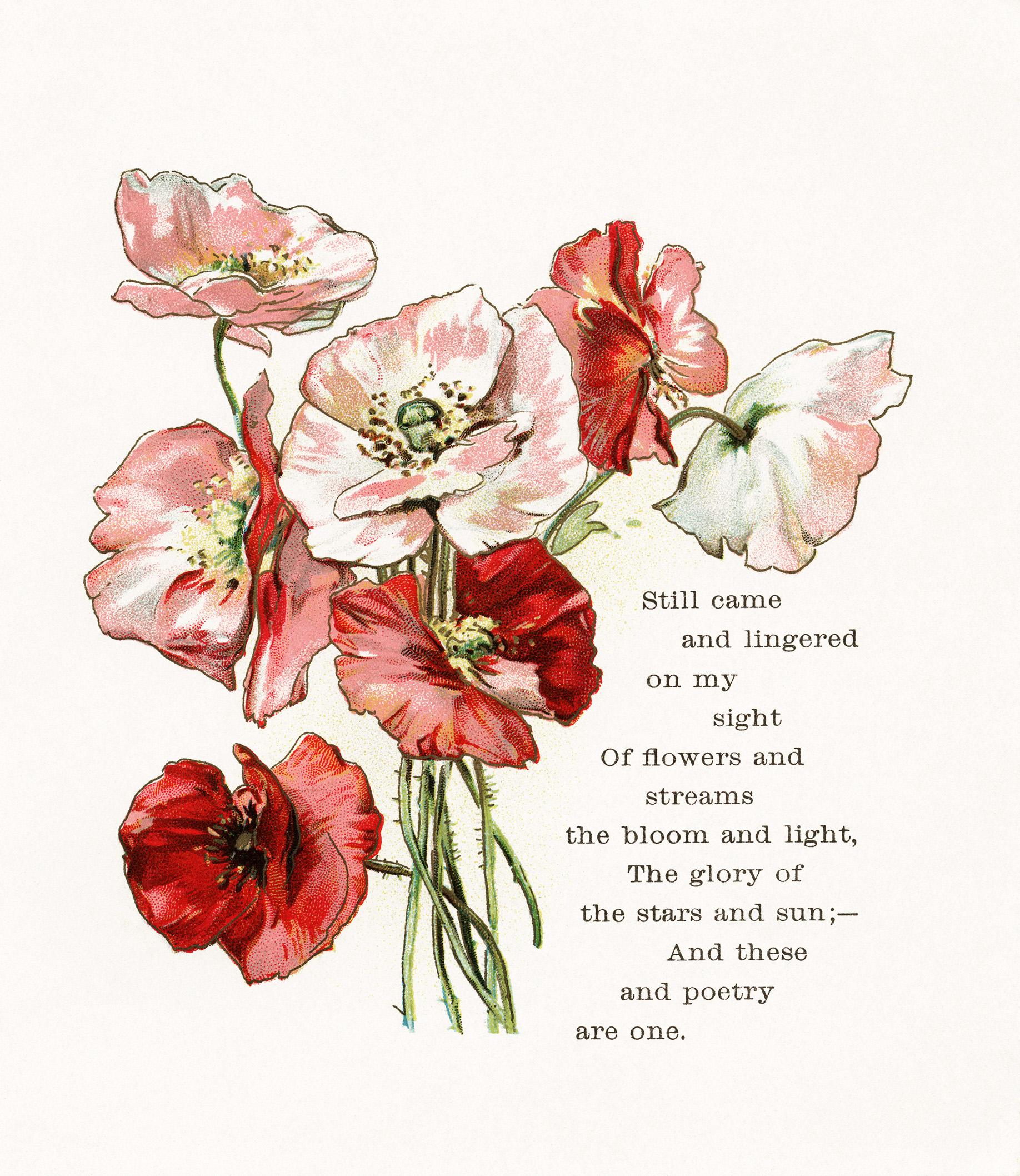 Vintage floral images free stock Vintage floral clipart free - ClipartFox stock