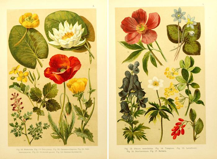 Vintage floral images free svg royalty free library Remodelaholic   25 Free Printable Vintage Floral Images svg royalty free library
