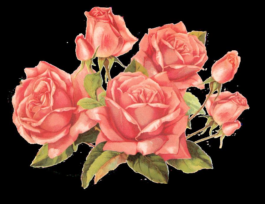 November flower clipart jpg stock Vintage flower clipart png - ClipartFest jpg stock