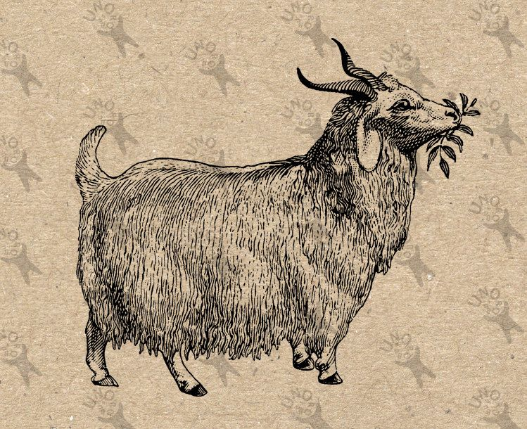 Vintage goat clipart clip royalty free Vintage image Goat with bell Farm Country Black White ... clip royalty free