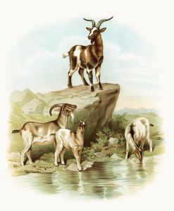 Vintage goat clipart library storybook goat image, vintage goat clipart, farm animal ... library