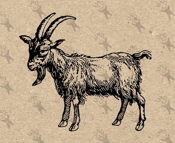Vintage goat clipart image freeuse library Goat Vintage image Farm Country Black White Instant Download ... image freeuse library