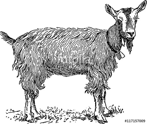 Vintage goat clipart svg royalty free library Vintage clipart goat\