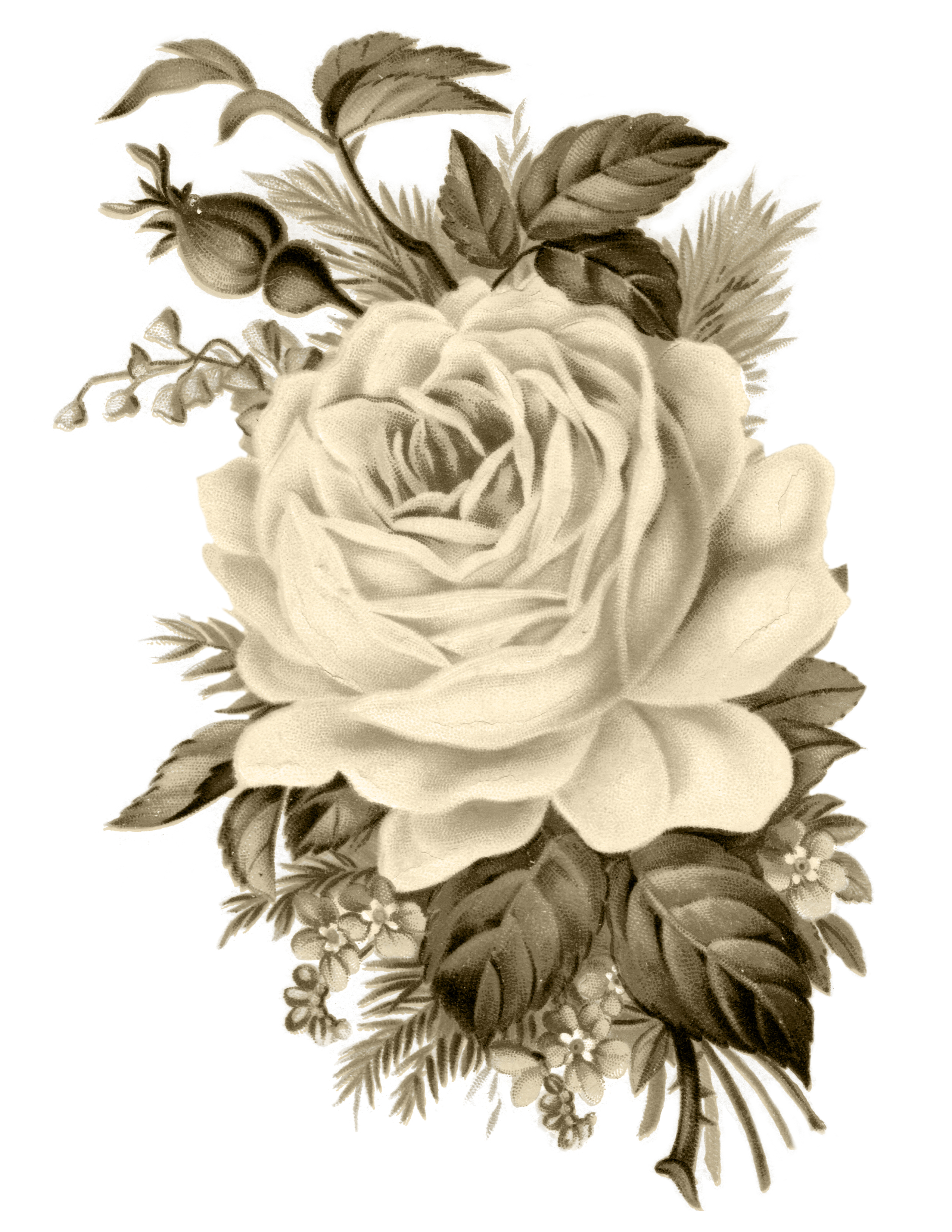 Vintage image sepia clipart vector free download Clip Art: Royalty Free Gorgeous Vintage Rose Image - Free ... vector free download