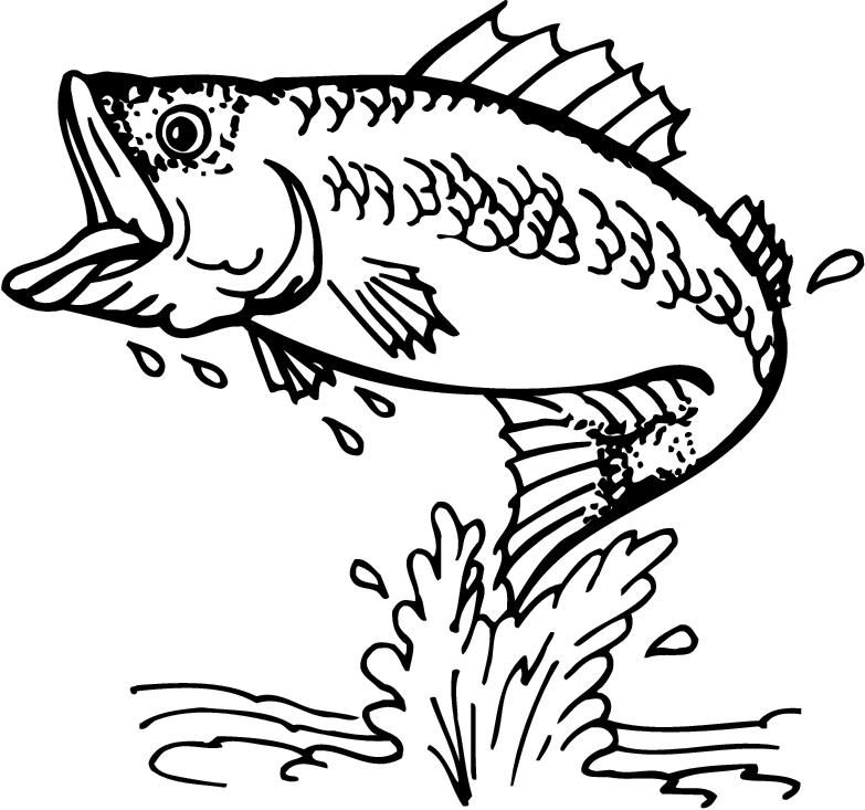 Vintage jumping bass clipart picture black and white This is best Bass Fish Outline #18252 Free Coloring Pages ... picture black and white