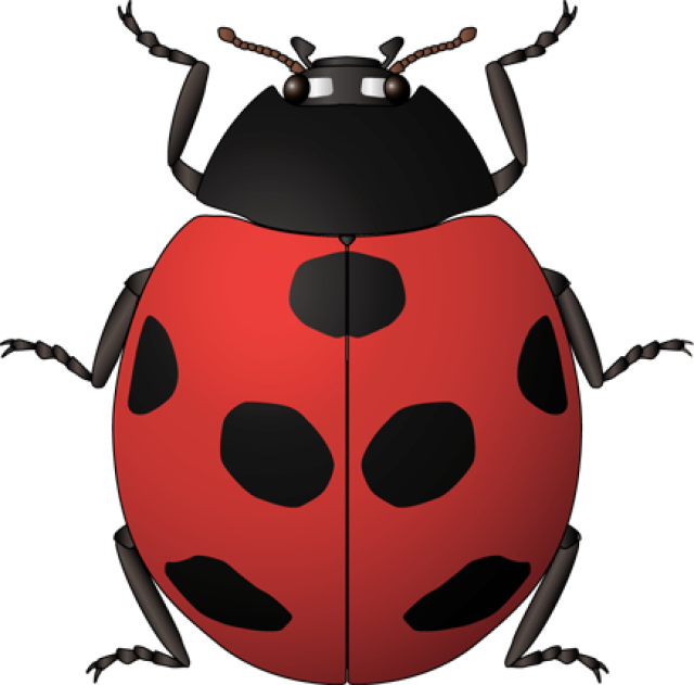 Vintage kids bug clipart royalty free HD Ladybug Clipart Vintage - Insects Kids Spanish , Free ... royalty free