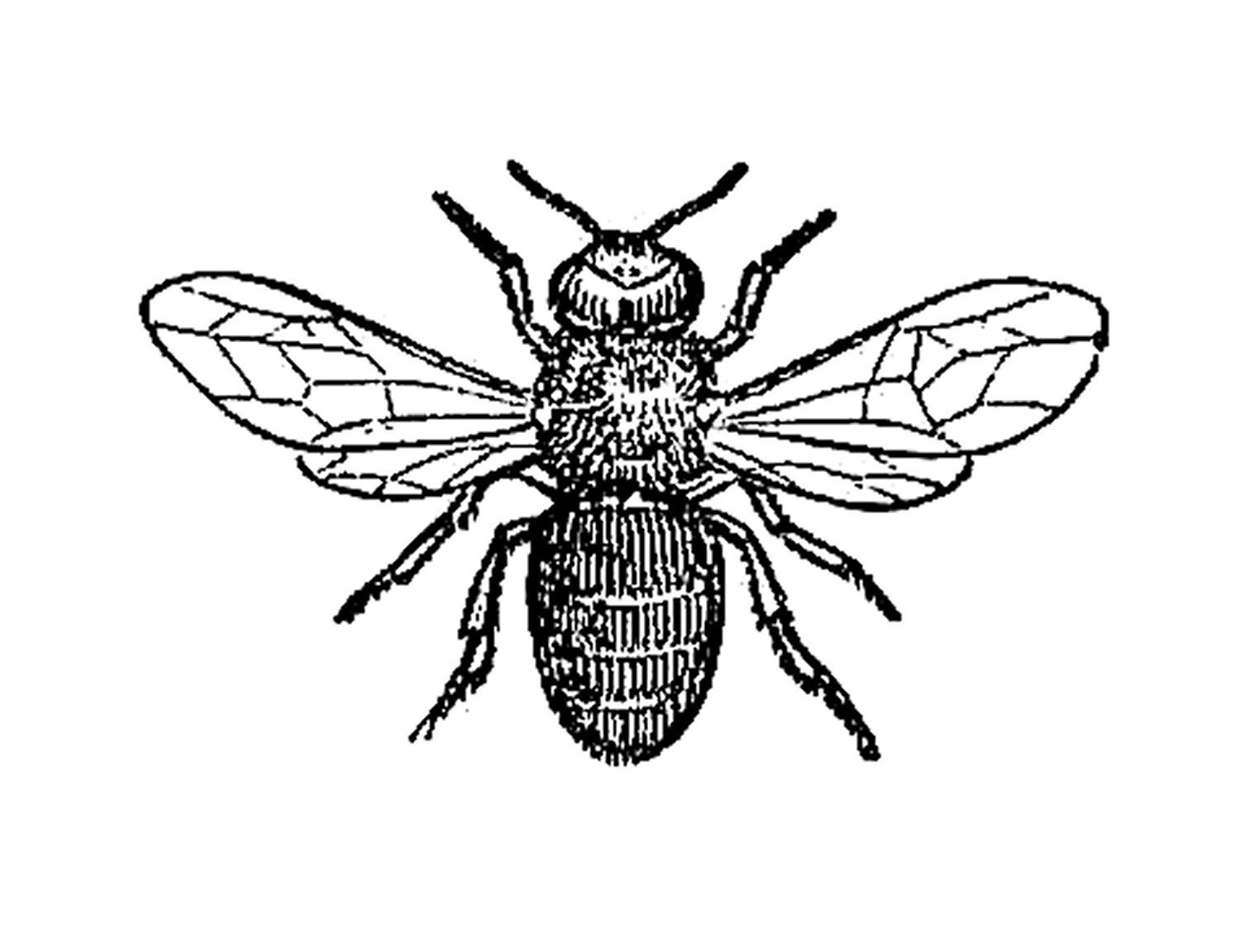 Vintage kids bug clipart picture black and white Antique Images: Insect Clip Art: Black and White ... picture black and white