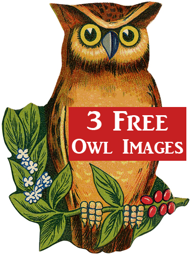 Vintage owl clipart free clip transparent download 3 Cutest Vintage Owl Images! - The Graphics Fairy clip transparent download