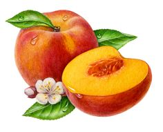 Vintage peaches clipart banner stock Free Peaches Cliparts, Download Free Clip Art, Free Clip Art ... banner stock