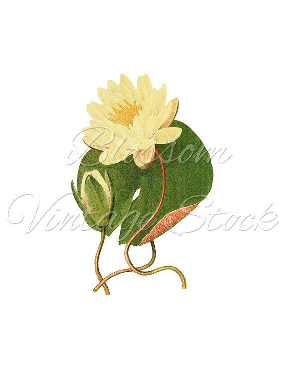 Vintage print clipart svg library library Lotus Flower Botanical Vintage Print, Printable Flower ... svg library library
