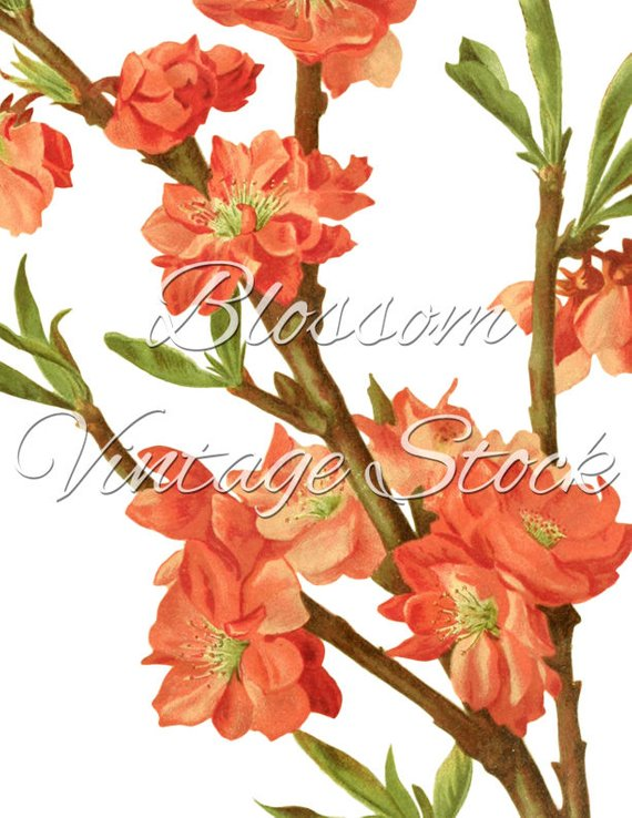 Vintage print clipart image library library Botanical Vintage Print Bunch Print, Vintage Art Prints ... image library library