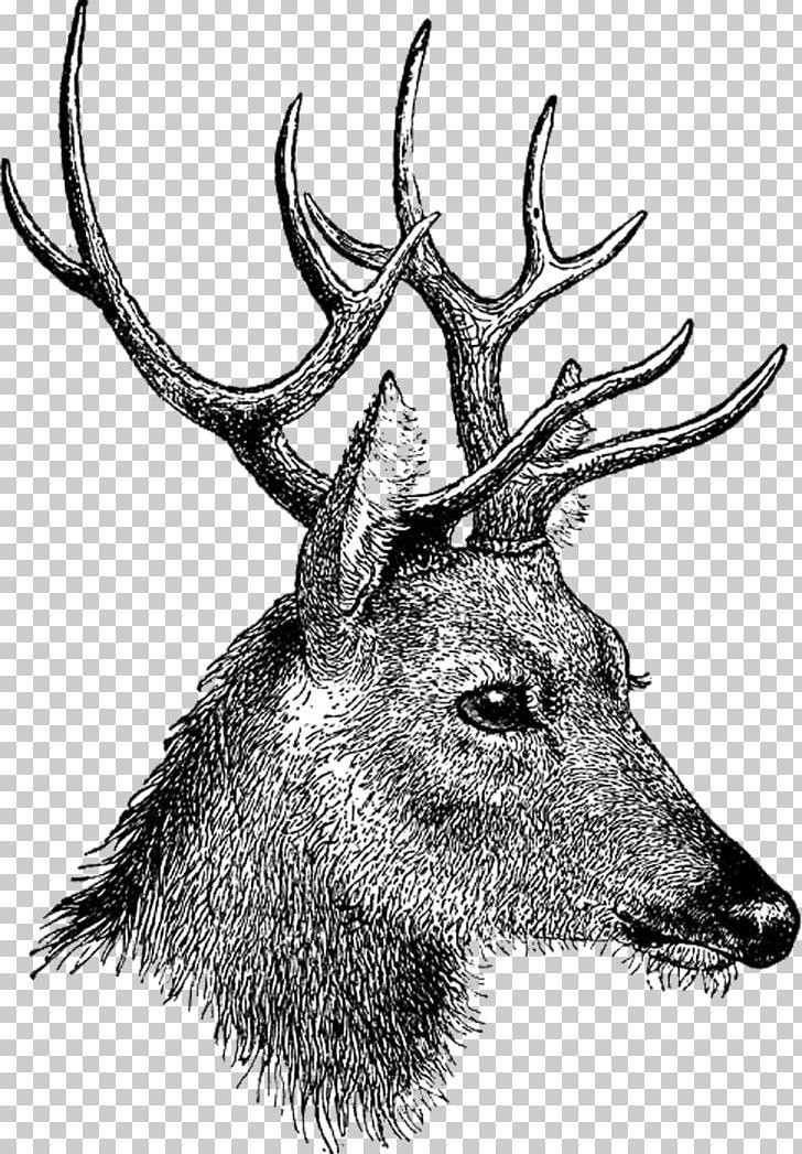 Vintage reindeer head clipart jpg download Vintage Deer Head PNG, Clipart, Animals, Deer Free PNG Download jpg download