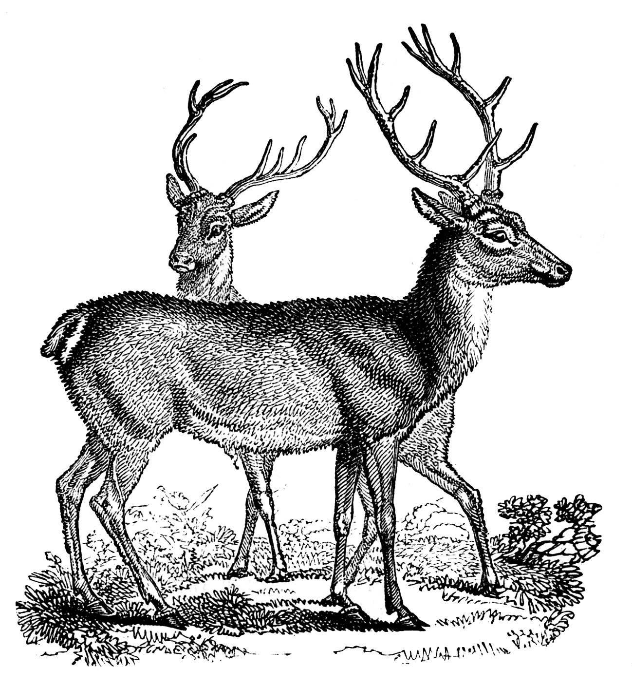 Vintage reindeer head clipart png free stock 12+ Deer and Antlers Clipart! - The Graphics Fairy png free stock