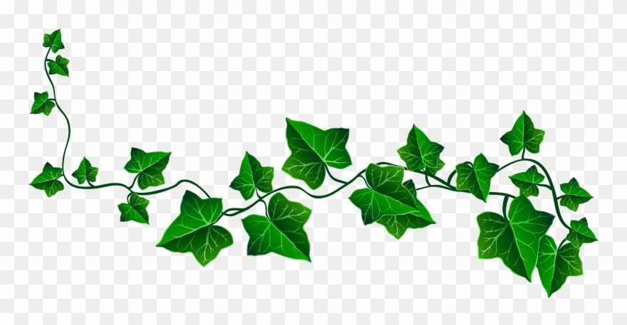 Vintage scrolly vines with leaves free clipart transparent svg black and white Vine Ivy Decoration Png Clipart Picture - Transparent ... svg black and white