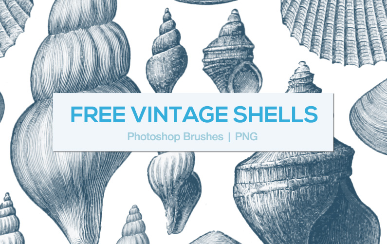 Vintage shell clipart graphic royalty free download FREE - Vintage Shells - Photoshop Brushes and PNGs - Mels ... graphic royalty free download