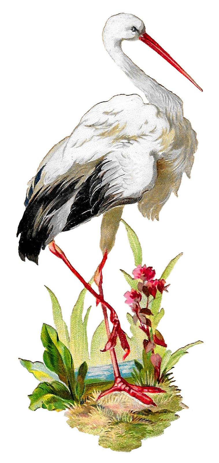 Vintage stork clipart banner black and white download Antique Images: Vintage White Stork Bird Clipart Artwork ... banner black and white download