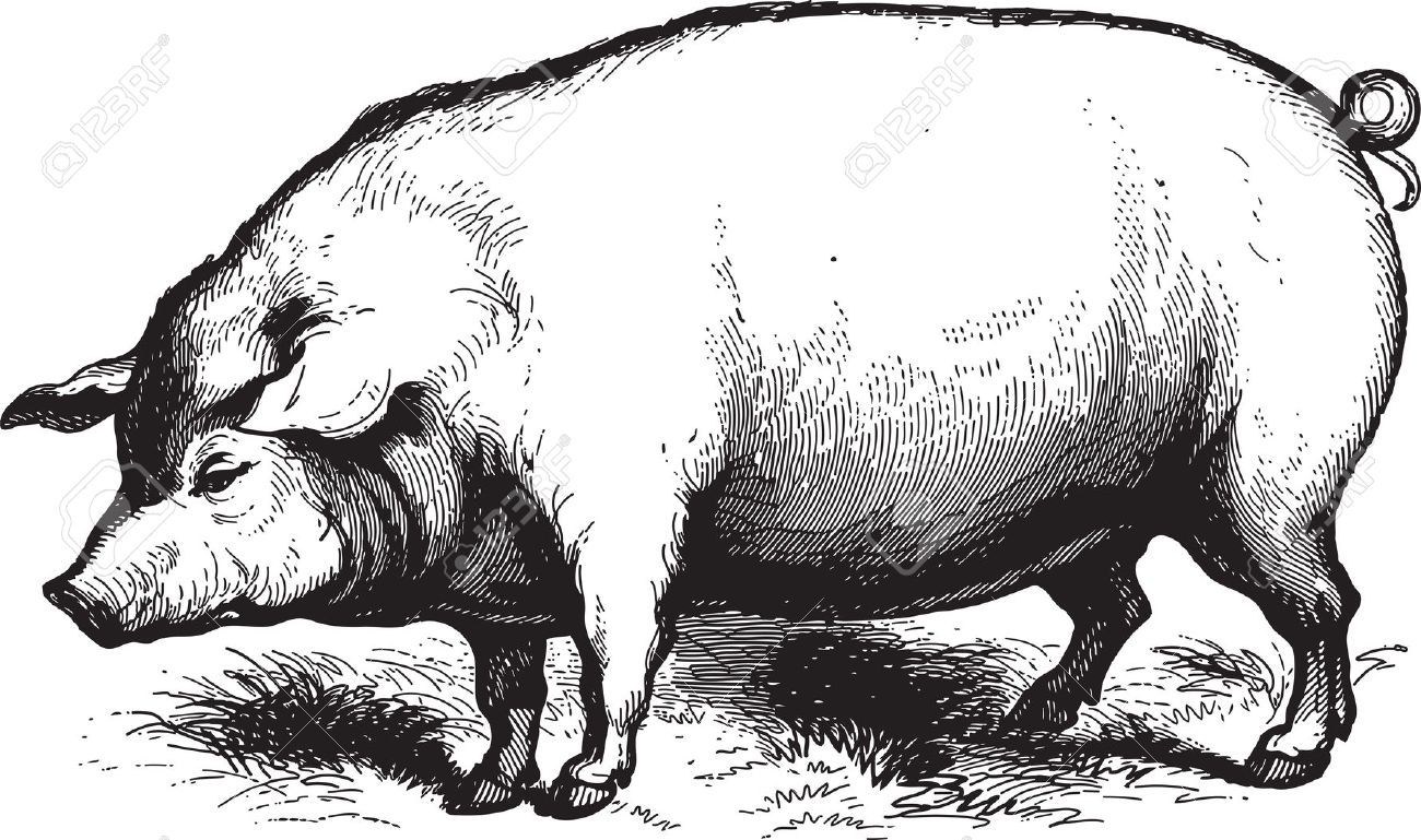 Vintage swine clipart frame png black and white download Meat Stock Illustrations, Cliparts And Royalty Free Meat ... png black and white download