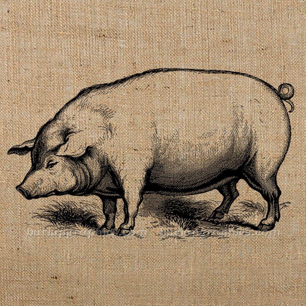 Vintage swine clipart frame png download FARM PIG vintage digital image download for card making ... png download