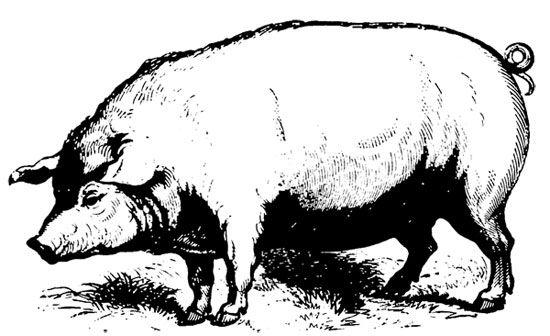 Vintage swine clipart frame png freeuse library free pig! (free vintage animal image :)   Design & Tips (for ... png freeuse library