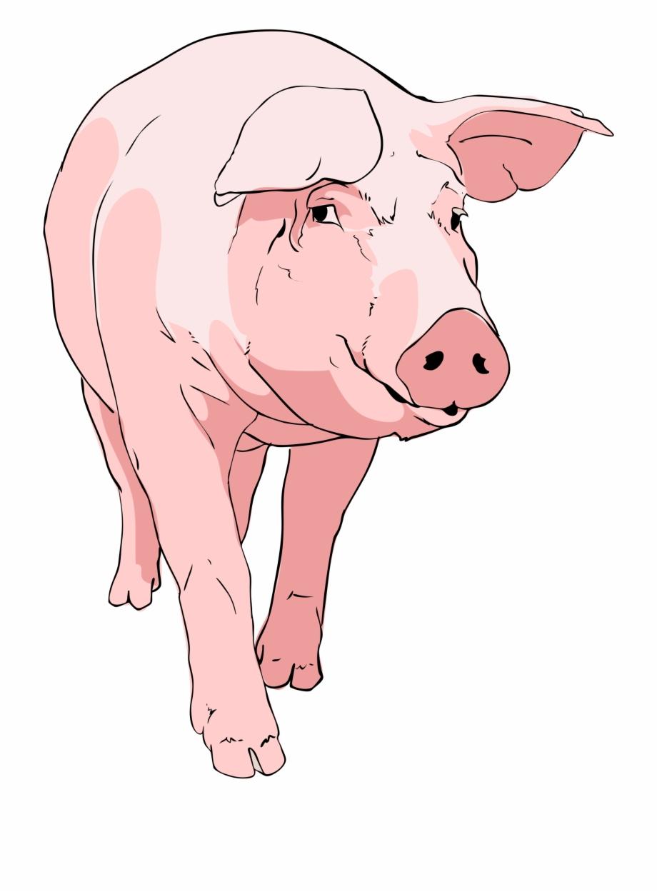 Vintage swine clipart frame vector Pig Clipart Transparent - Vintage Pig Clip Art {#470148 ... vector