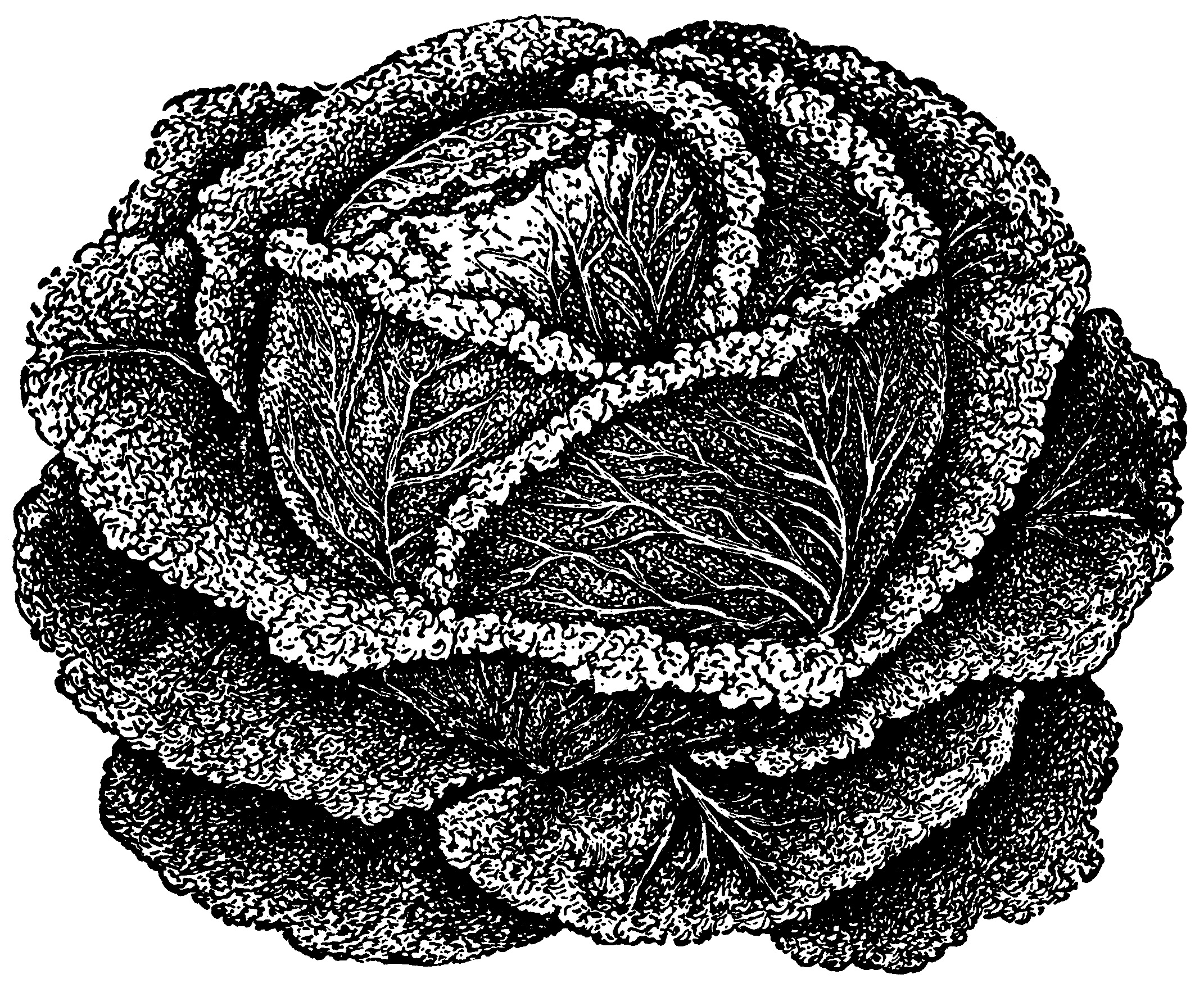Vintage vegetable clipart black and white jpg free library Cabbage Clip Art - Old Design Shop Blog jpg free library