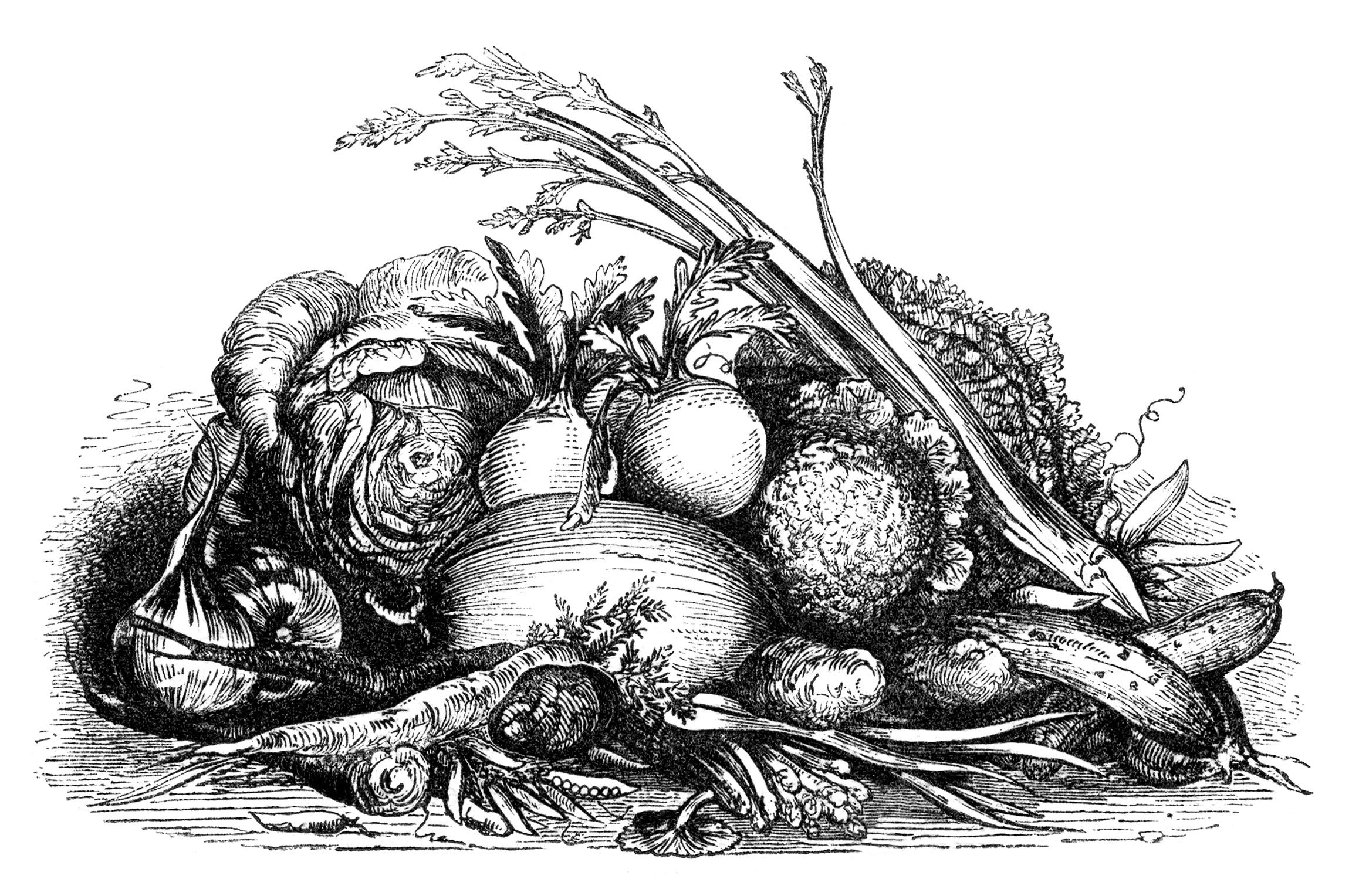 Vintage vegetable clipart black and white clipart library download Fall Harvest Display of Vegetables Clip Art - Old Design ... clipart library download