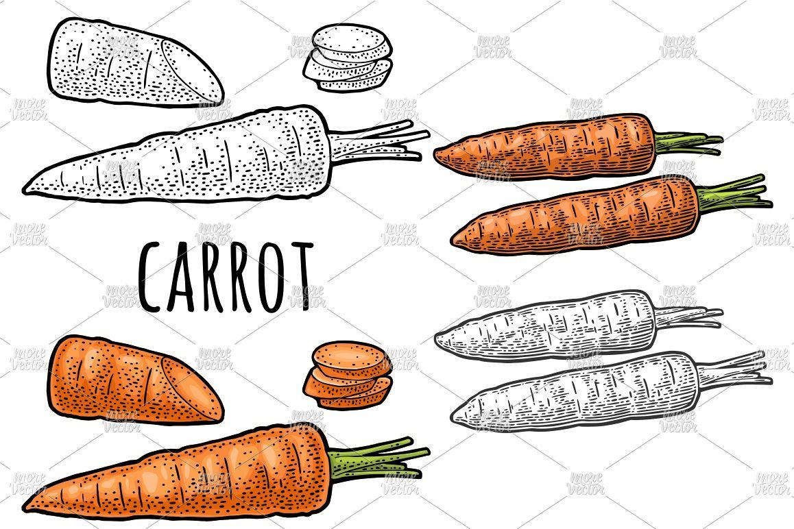 Vintage vegetable clipart color clip art free download Carrots Vector color vintage engraving clip art free download