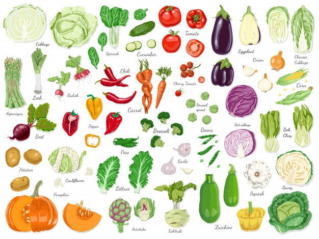 Vintage vegetable clipart color banner free library Vegetables Vectors, Photos and PSD files | Free Download banner free library