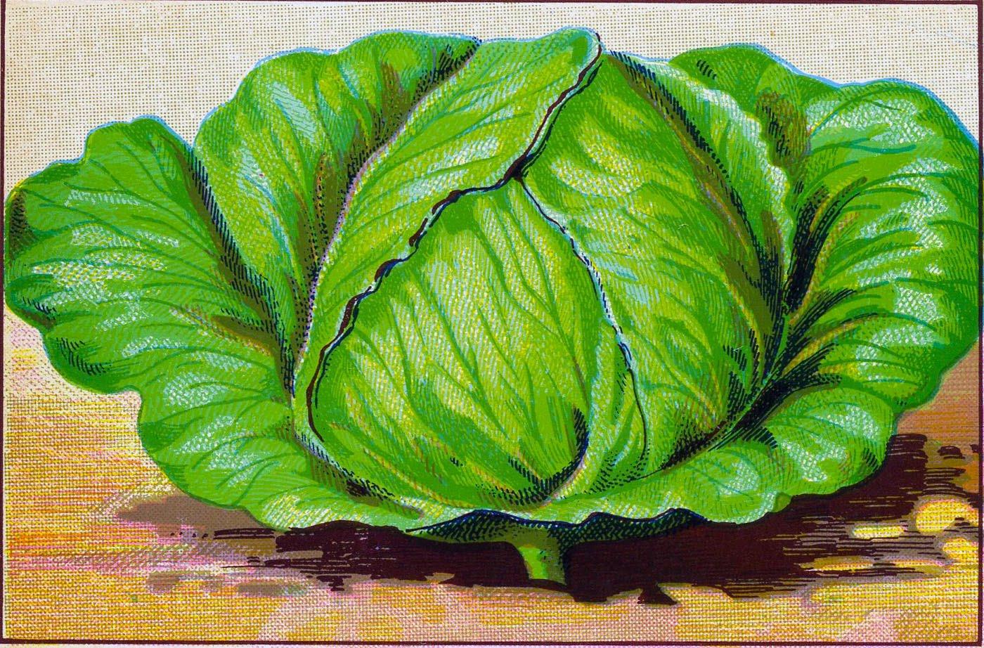 Vintage vegetable clipart color picture transparent download 50 Best Free Gardening Images - The Graphics Fairy picture transparent download