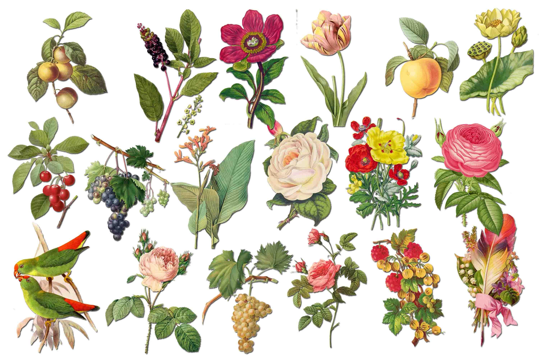 Vintage victorian flowers clipart clip art transparent library Flowers Clipart Rose Clip Art clip art transparent library