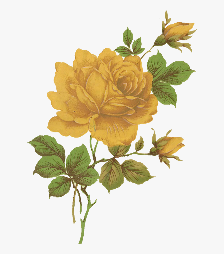 Vintage yellow flower clipart svg freeuse library Image - Vintage Yellow Rose Png #1314036 - Free Cliparts on ... svg freeuse library