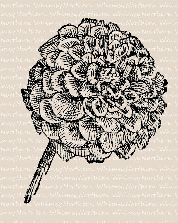Vintage zinnia clipart graphic free stock Zinnia Clip Art – Flower Clip Art – Vintage Flower ... graphic free stock