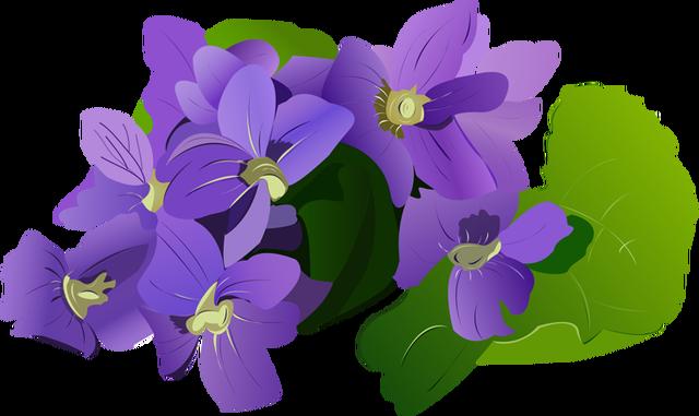 Violet images clipart picture transparent download Violet Flower Clipart | Free download best Violet Flower ... picture transparent download