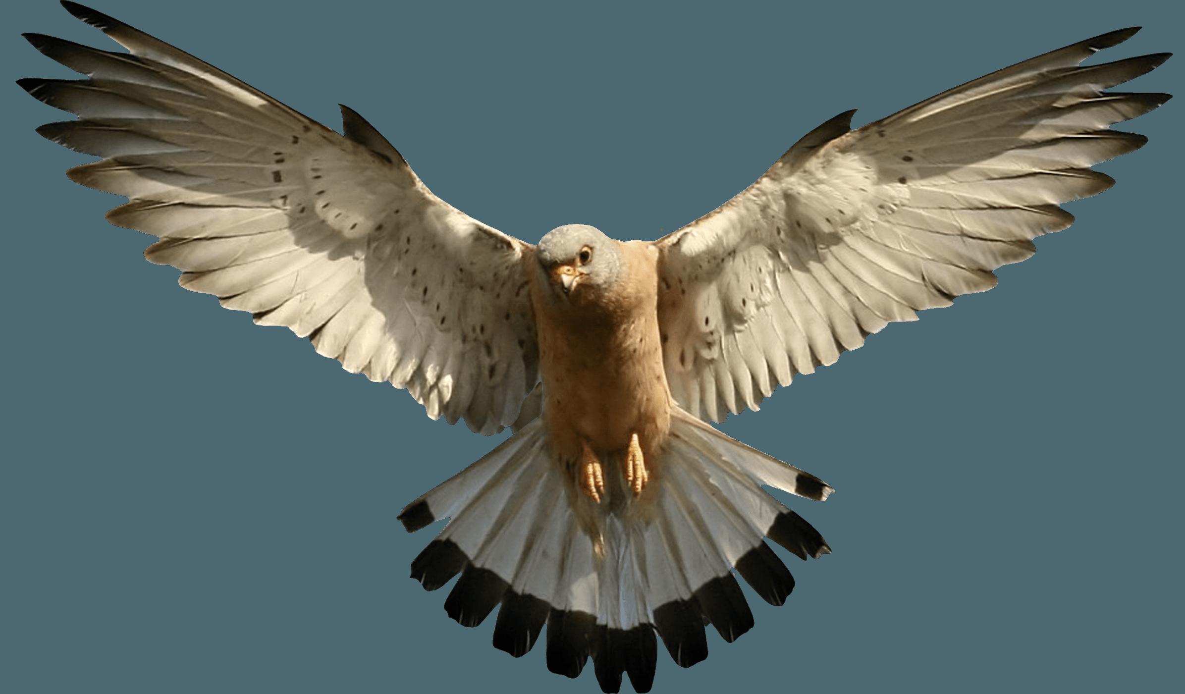 Viper fish clipart clip art transparent download Eagle Png Image Download PNG Image   Birds of a Feather - Flock ... clip art transparent download