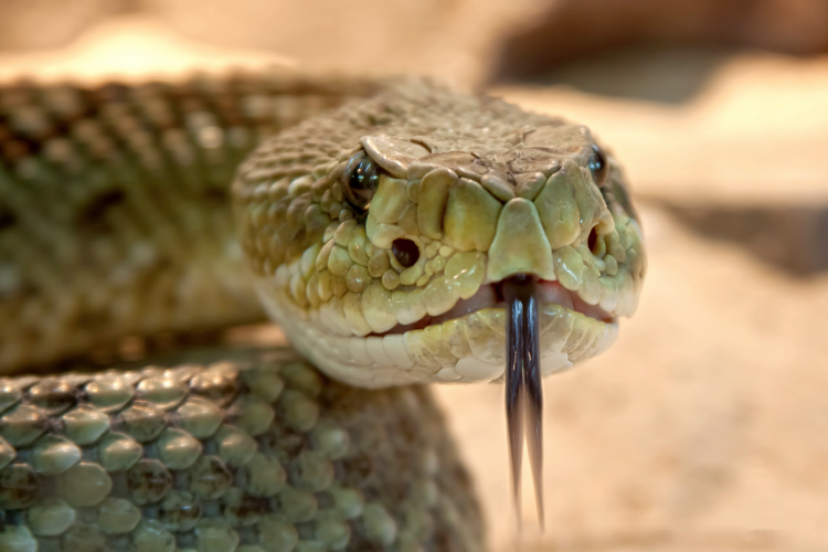 Viper snake with medical clipart vector transparent Tox and Hound - Snakes! Why\'d it have to be SNAKES? vector transparent