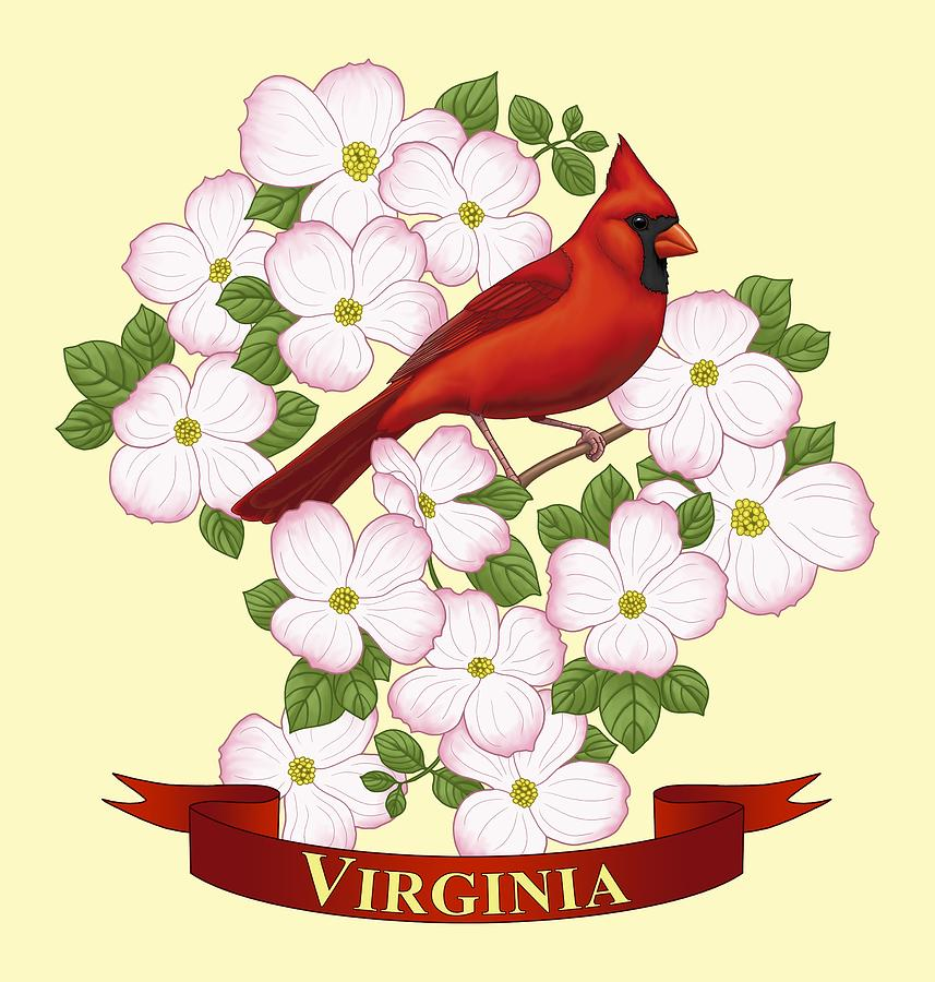 Red cardinal in flight dogwood branch west virginia clipart picture royalty free stock Virginia State Bird Cardinal And Flowering Dogwood Painting ... picture royalty free stock