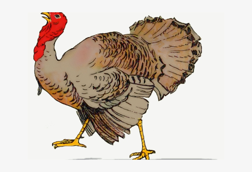 Voting turkey clipart clip freeuse download Turkey Cartoon Images Free - Like Turkey Voting For ... clip freeuse download