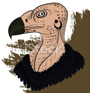Vulture head clipart jpg royalty free Vulture Head premium clipart - ClipartLogo.com jpg royalty free