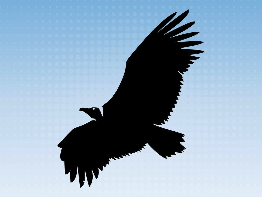 Vulture head silhouette clipart picture library library Flying Vulture Vector Art & Graphics | freevector.com picture library library