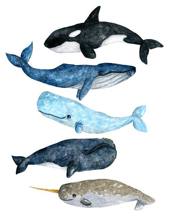 W whale clipart jpg freeuse Watercolor whale, watercolor whale clipart, whale clipart ... jpg freeuse